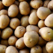 Potatoes background - Stock Photo