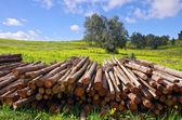 Pile of trunks — Stock Photo