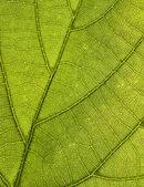Leaf Pattern — Stock Photo