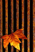 Leaf in drain — Stock Photo