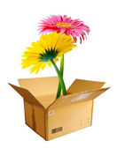 Packed Flowers — Stock Photo