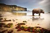 Beach Rhino — Stock Photo