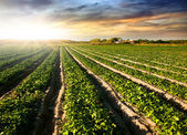 耕された土地 — ストック写真