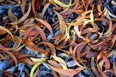Eucalyptus Leafs — Stock Photo