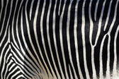 Zebra Skin — Stock Photo