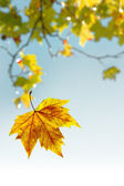 Flying Leaf — Stock Photo
