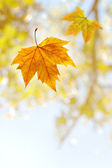 Falling Leaf — Stock Photo
