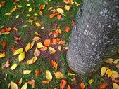 Fall leafs — Stock Photo