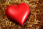Fragile Heart — Stock Photo