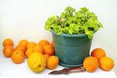 Oranges and Vase — Stock Photo