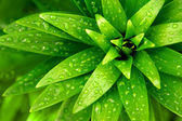 Wet Foliage — Stock Photo