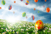 Eggs in Flower Field — Stock Photo