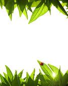 Foliage Frame — Stock Photo
