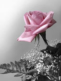 粉色花瓣 — 图库照片