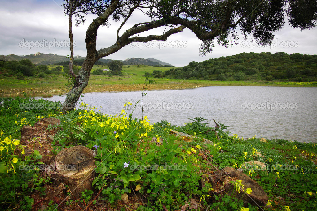 Landscape with a lake a tree and yellow flowers in Sintra, Portugal  — Stock Photo #5873718