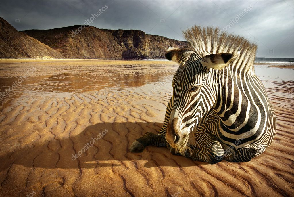 Surreal scene of a sitting zebra in an empty beach  — 图库照片 #5873993