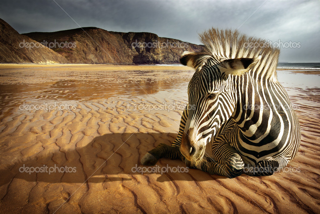 Surreal scene of a sitting zebra in an empty beach  — Foto Stock #5873993