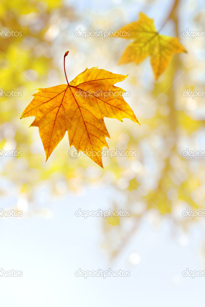 Falling wilted leaf agaist a out of focus tree branch — Stock Photo #5874516