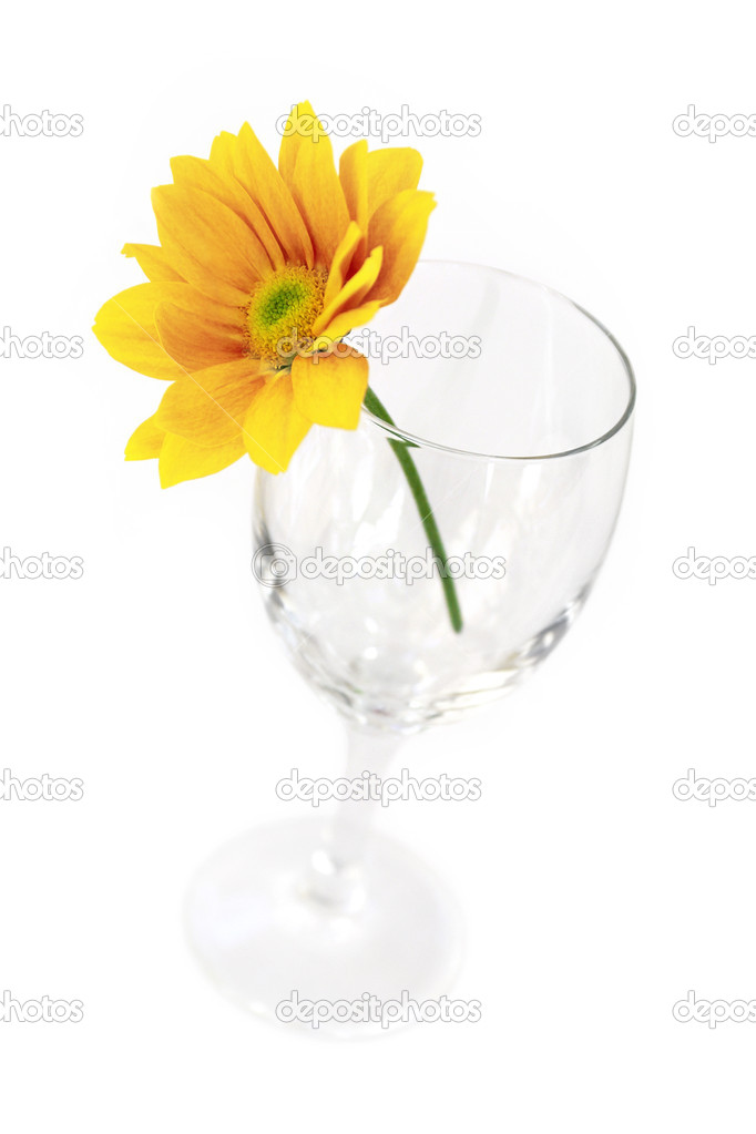 Yellow gerbera flower in an empty glass isolated on a white background — Stock Photo #5874685