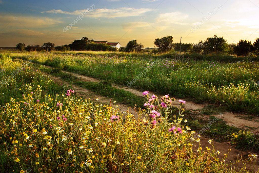 Фотообои Сельский Пейзаж