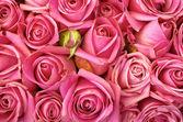 Lit de roses — Photo