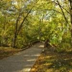 Old Foot Bridge in Autumn — Stock Photo #5898735