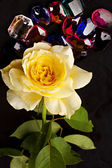 Yellow Rose and Gem Stones — Stock Photo