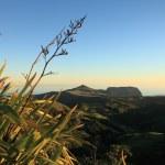 Flax plants in dawn light — Stock Photo #6103527