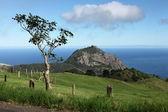 High Hill peak on St Helena — Stock Photo