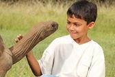 少年は巨大な亀の目に見える — ストック写真