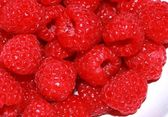 Vibrant and juicy ripe raspberries background — Stock Photo