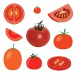 Tomato — Stock Vector #6500432