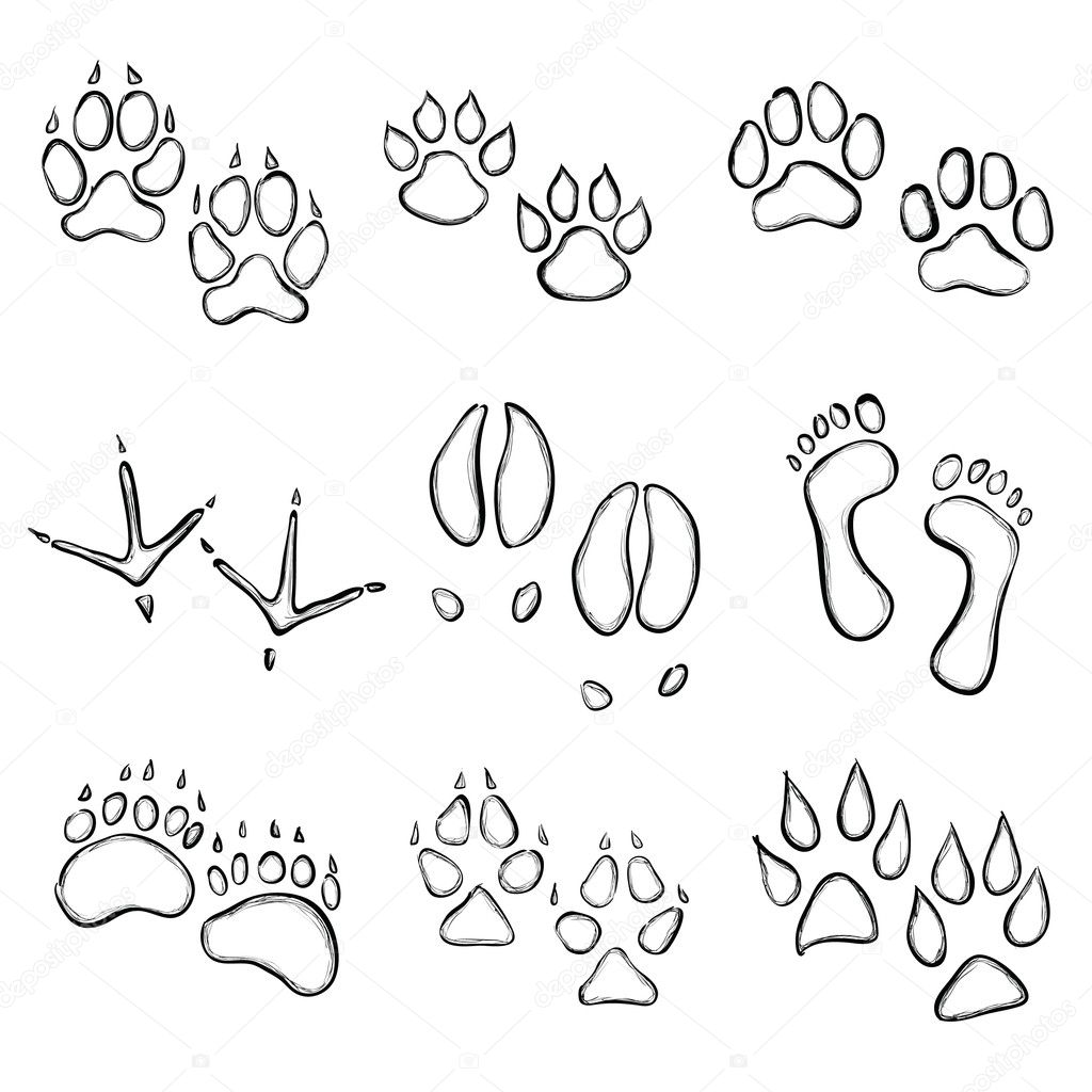 Wild Animal Paw Prints http://depositphotos.com/6500465/stock-illustration-Paw-prints.html