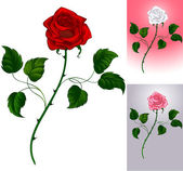 Red rose on white — Stock Vector