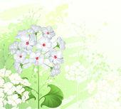 White wild flowers — Stock Vector