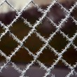 Needle crystals of ice, frost covered the mesh fence — Stockfoto