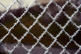 Needle crystals of ice, frost covered the mesh fence — Stock Photo