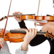 Violinists isolated - Stock Photo