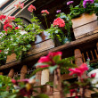 Flowers on a wooden balcony - Stockfoto