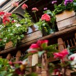 Flowers on a wooden balcony - Stock Photo