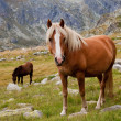 Horse in the mountains — Stock Photo