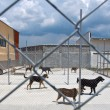 Stock Photo: Dogs shelter