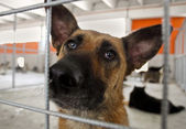 Homeless dog shelter — Stock Photo