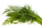 Fresh fennel isolated — Stock Photo