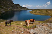 Horses by a Rila mountains lake — Stock Photo