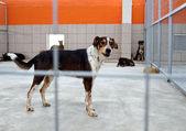Hund in einem tierheim — Stockfoto
