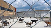 Dogs shelter — Stock Photo