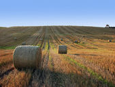 Straw bales — Foto Stock