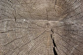 Old pine texture — Stock Photo