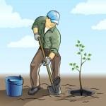 Gardener plant a tree — Stock Vector